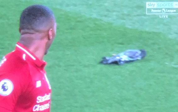 (Video) Sturridge spots dead pigeon on pitch after missing a chance