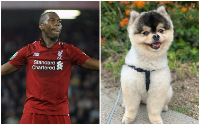 Brilliant news: Daniel Sturridge's plea for stolen dog to be returned has worked