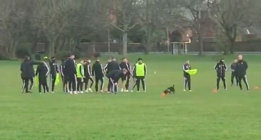 (Video) Dog does its business as Sheffield United train on Stanley Park next to Anfield